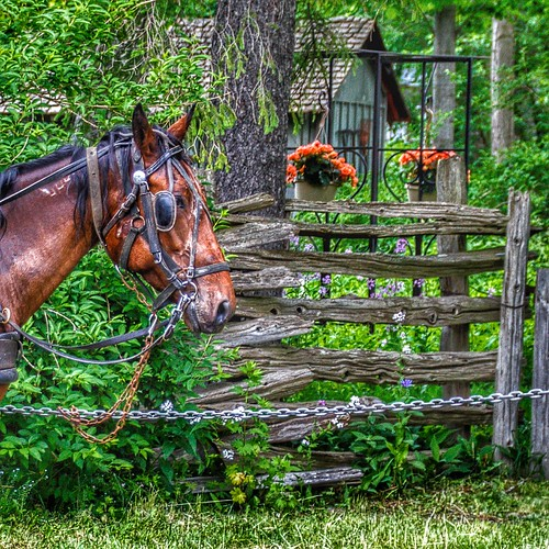 Elora Ontario ~ Canada ~ Waiting for Tourists