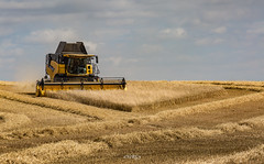 harvest (deltic17) Tags: combineharvester harvester fields corn wheat farmer farming tractor machine agriculture summer drought canon5dmk3 bugs yellow notts england nature grow feed pattern landscape