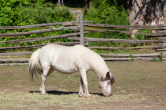 (A Great Capture) Tags: farm horse eating hay agreatcapture agc wwwagreatcapturecom adjm ash2276 ashleylduffus ald mobilejay jamesmitchell toronto on ontario canada canadian photographer northamerica torontoexplore summer summertime été sommer 2018 eos digital dslr lens canon rebel t5i outdoor outdoors outside natural