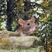 Rat among rocks and trees