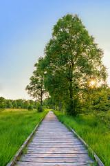 Ewiges-Meer (ciddi89) Tags: green trees bäume pfad weg sonnenuntergang sunset ewigesmeer meer see moor moorgebiet ostfriesland eversmeer