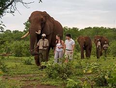 1. Elephant Encounters