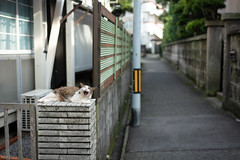猫 (fumi*23) Tags: ilce7rm3 sony 55mm sonnartfe55mmf18za sel55f18z cat animal feline chat gato katze neko street alley alleyway miyazaki emount a7r3 bokeh ねこ 猫 ソニー 宮崎 欠伸