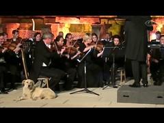 Cachorro rouba a cena durante concerto na Turquia (portalminas) Tags: cachorro rouba cena durante concerto na turquia