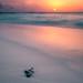 Sunset on the beach - Maldives - Travel photography