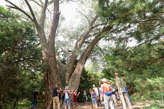 KZUM's How's it Growin'? - Big if you're a tree! | Nature Walk