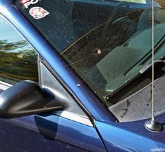 Halloween Decoration (Chad Horwedel) Tags: 2003fordmustanggt fordmustanggt ford mustanggt car convertible orbweaver spider spiderweb bolingbrook illinois