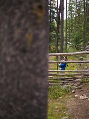 jasper 2017 032 (adamlucienroy) Tags: jasper jaspernationalpark nationalpark forest gh4 panasonic telephoto leica primelens prime 25mm f14 alberta edmonton yeg yegdt canada