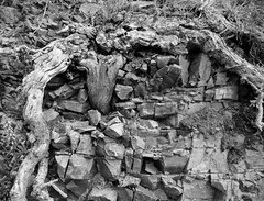 Old tree roots frame a slate rock face (Monceau) Tags: old tree roots frame slate rock jumble jersey