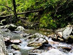 Por el Ripolles (Gatodidi) Tags: ripolles agua rocas saltos bosque camino montaña verde catalunya cataluña frescor valle