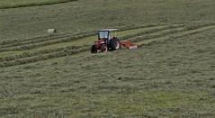 Lavori nei campi (maurizio.pretto) Tags: lavoro work fields campi prati lawns hay fieno montagna mountains asiago italy