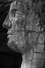 Tindaro Screpolato by Igor Mitoraj (Angeeeeelaaaaa) Tags: giardinodiboboli boboligardens florence firenze blackandwhite bw blackwhite monochrome mitoraj igormitoraj sculpture tindaro
