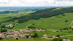 Solutré (Françoise et Gérard) Tags: bourgogne burgundy pouilly pouillyfuissé solutré chasselas vigne raisin vinblanc