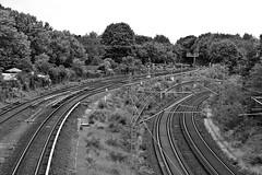 S-Bahn (just.Luc) Tags: berlin berlijn metal metaal rail spoor spoorweg chemindefer trees bomen arbres bäume allemagne deutschland duitsland germany bn nb zw monochroom monotone monochrome bw europa europe árbol albero
