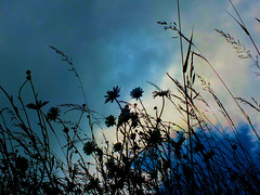 Keld meadow (tina negus) Tags: keld meadow sky wildflower yorkshire dales swaledale macro