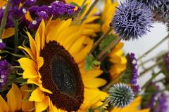 Sunflowers! (vang0793) Tags: flowers flower market bremerton washington people farm pretty sunflower beautiful
