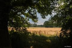Westerscheveld - Rolde (Lars Blaauw) Tags: drenthe mooidrenthe aaenhunze natuur nature heide bomen tree landschap landscape landgoed nederland mooinederland c