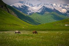 Ushguli Village in Svaneti region, Georgia (CamelKW) Tags: georgia june2017 ushgulivillage svanetiregion