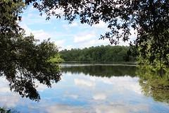 Through the trees (galsafrafoto) Tags: sesquicentennialstatepark southcarolina lake clouds reflections landscape nature summer august sesqui thesunshinegroup damniwishidtakenthat coth coth5 bestofdamniwishidtakenthat
