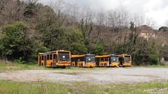 AMT 3807, 4514, 4517 e 3802 (Lu_Pi) Tags: amt genova autobus bus busaccantonato autobusradiati busradiato bolzaneto iveco iveco490 turbocity turbocityur bmb bredamenarinibus m231mu