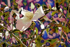Winter Flowers (maginoz1) Tags: flowers foliage winter august 2018 bulla melbourne australia abstract art contemporary canon g3x