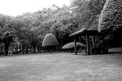 Park in a rainy day (shou yokoya) Tags: film 135 35㎜ bessat bw monochrome nokton voigtlănder park analogue