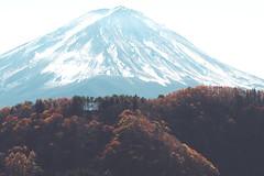 富士山|西湖 (里卡豆) Tags: fujinomiyashi shizuokaken 日本 jp fujiyoshidashi tōkyōto olympus 40150mm f28 pro olympus40150mmf28pro japan kanto tokyo 富士山 em10markiii fujikawaguchikomachi yamanashiken