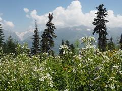 Georgien - Mestia (ulfinger) Tags: georgien swanetien kaukasus landschaft gebirge natur