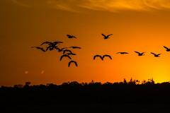 Revoada de Garças (Edgar Cardoso Photography) Tags: pôrdosol sunset amazing landscape golden hour