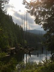 Nanaimo (mademoisellelapiquante) Tags: bc britishcolumbia canada pacificnorthwest vancouverisland forest woods trees nanaimo