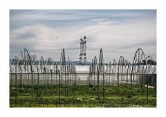 Ribeira de Frades, Coimbra (Sr. Cordeiro) Tags: ribeiradefrades coimbra portugal rural estufa greenhouse poste elétrico electrical post sony rx100 ii mkii