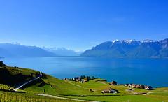 Splendeurs de Lavaux (Diegojack) Tags: chexbres vaud suisse d7200 paysages léman lac bleu lavaux vignes rivaz montagnes hautesavoie groupenuagesetciel