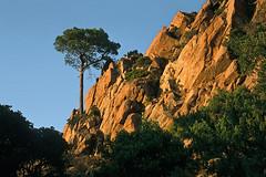 Corse (Calanques de Piana) 1998 (Joseff_K) Tags: corsica コルシカ語 korsika корсика córcega קורסיקה korsyką córsega كورسيكا diapositive leica film inversible ektachrome leicacl kodak 100asa montagne mountain kodakektachrome100 arbre tree calanquesdepiana calanque rocher rock canyon paysage ciel pinparasol stonepine forêt