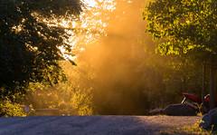 Staub (maikkregel) Tags: maikkregel sony vogelsang eifel natur licht staub baum dunst sonnenuntergang abend