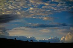 Les vaches (Jean-François Chamberlan) Tags: gottechain wallonie brabantwallon cows ciel sonydscrx100 sonyrx100