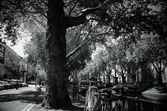 amazing tree@Kö, Düsseldorf (Amselchen) Tags: bike bicycle season summer street promnade sidewalk water bnw blackandwhite light shadow bokeh dof depthoffield sony a7rii sonyilce7rm2 sigma mc11 30mmf14dchsm|art