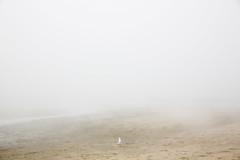 (Peter de Krom) Tags: 2018 alleen hoekvanholland juni klimaat kust meeuw mist peterdekrom solo strand vogel warm zee zeemist zeevlam zomer sea gull seagull fog beach hvh animal bird lost empty alone lonely sand
