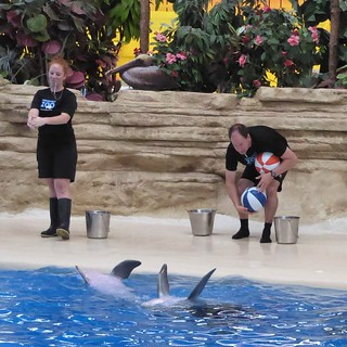 Brookfield, IL, Brookfield Zoo, Performing Dolphin Duo