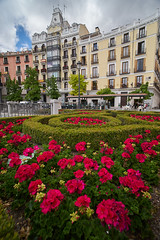Madrid (silvia_mozzon) Tags: plaza oriente plazadeoriente madrid spain spagna espana europe europa travel travelphotography sony sonyalpha sonyalpha7 sonya7 manualfocus manuallens laowa 15mm manuale wide wideangle polarized architecture architettura history flowers flower summer holiday square building urban urbanphotography city landscapesseascapescityscapes