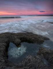 Rock pools and pink mornings (Gary Eastwood) Tags: sunrise pinksandblues beacheslandscapes beach nikond750 nikon nisifilters seascape surf greatoceanroad longexposure morning pinksky cloudsstormssunsetssunrises clouds rockpools