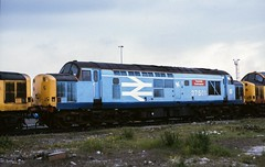 Class 37/5 no. 37501 Teesside Steelmaster @ Thornaby TMD 20/06/1987 [slide 8761] (graeme9022) Tags: british rail railways br steel pale bright blue livery large logo railfreight freight trainload sector english diesel electric type 3 coco locomotive engine refurbished uk train traction meintenance depot 1980s north east england northern eastern region