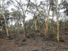 Ochre Trail (5km) (trailhikingaust) Tags: hikes trails walks westernaustralia