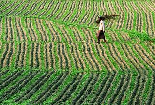 Farmer in pattern