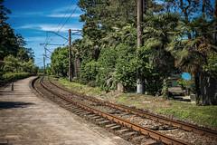 Where I am from (Melissa Maples) Tags: batumi batum ბათუმი adjara აჭარა georgia gürcistan sakartvelo საქართველო asia 土耳其 apple iphone iphonex cameraphone spring მწვანეკეპი mtsvanecape traintracks railroadtracks railway tracks