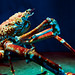 Japanese spider crab (Macrocheira kaempferi) of Enoshima Aquarium, Fujisawa : タカアシガニ(新江ノ島水族館)