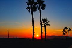 27 (morgan@morgangenser.com) Tags: sunset red orangeyellow blue pretty cloud silhouette sun evening dusk palmtrees bikepath sand beach santamonica pacificpalisades beautiful black dark cement amazing gorgeous inawe photobymorgangenser ca