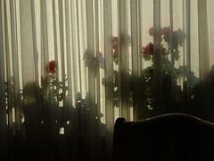 Neuer Morgen 003 (bratispixl) Tags: fotosafari oberbayern germany bratispixl tele lichtwechsel schärfentiefe fokussierung bergwelt spot outdoor indoor architektur landschaft grat hügel wasser sonnenfotografie see flus tiere nature nigth day spuren blumen wolken video