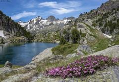 Estany Petit de Colieto (sostingut) Tags: llacspirineus nikon tamron lago verano nieve pirineos cordillera d750