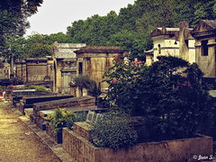 Vintage (Jean S..) Tags: cemetery graves montparnasse trees outdoors flowers