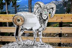 Be Aware of Ticks Interpretive Sign, Sulphur Mountain Gondola, Banff National Park, Alberta, Canada, (Black Diamond Images) Tags: sulphurmountain mountsulphur bowvalleyviews bowvalley bowriver banff banffnationalpark alberta canada scenictours scenic 2012 banffgondola goldola banfflookout sulphurmountainlookout sulphurmountaincosmicraystation ticks tick travelalberta albertatravel albertaholiday holidayalberta